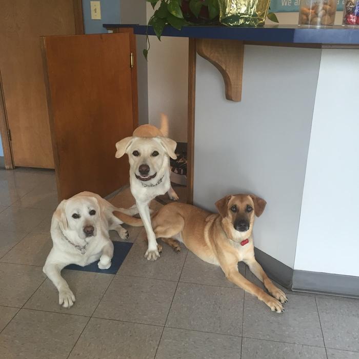 Chella, Aggie, & Jess  photo